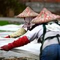 東部第一期稻作 插秧4.jpg