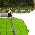 東部第一期稻作 插秧11.jpg