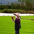 東部第一期稻作 插秧18.jpg