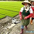 東部第一期稻作 插秧24.jpg