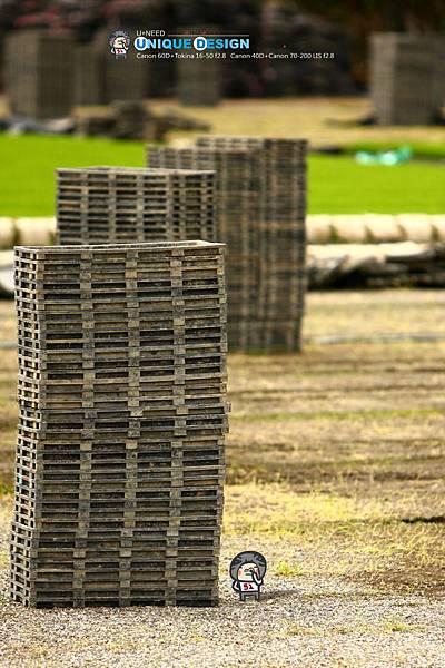 東部第一期稻作 插秧25.jpg