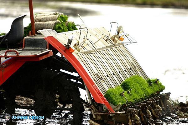 東部第一期稻作 插秧35.jpg