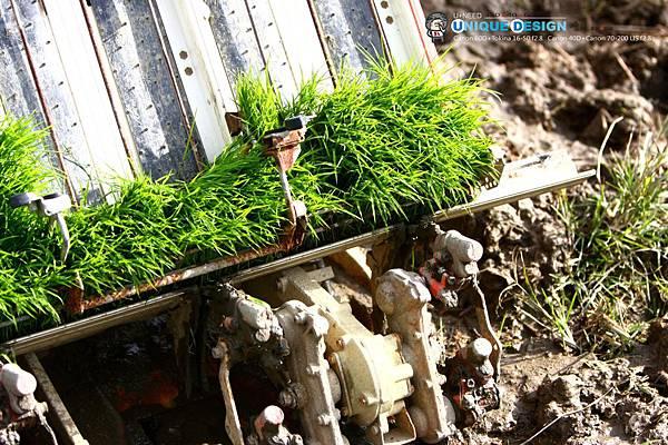 東部第一期稻作 插秧39.jpg