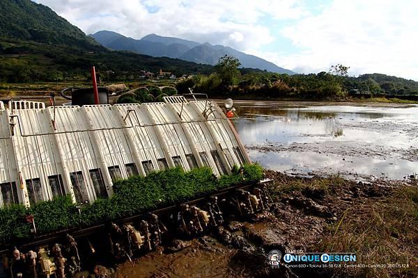 東部第一期稻作 插秧40.jpg