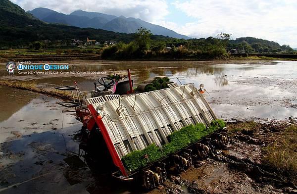 東部第一期稻作 插秧41.jpg