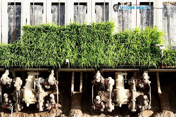 東部第一期稻作 插秧42.jpg