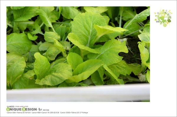 種菜去8.jpg