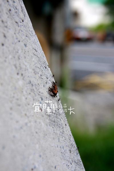IMG_8642.JPG