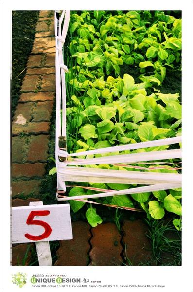 種菜去11.jpg