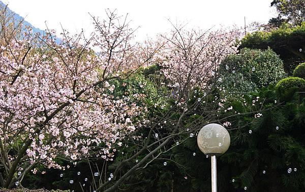 20110305天元宮-27.jpg