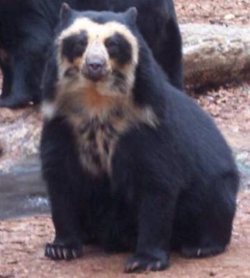 bearhoundcute21.jpg