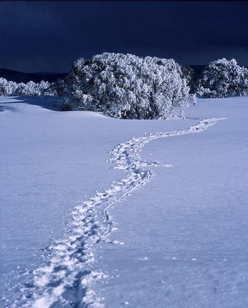0171.03.footprints.jpg