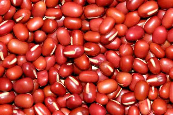 紅豆-種仔1.jpg