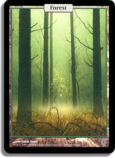 unhforest.jpg