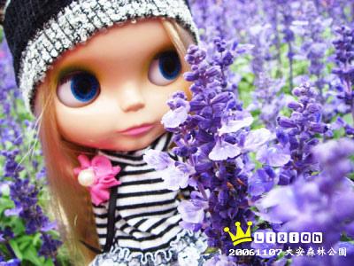 紫色的花!是紫羅蘭嗎?!噗~