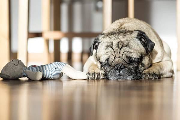達人的短眠熟睡法.jpg