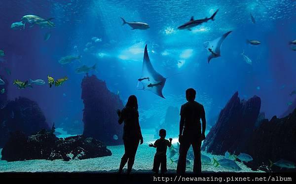 S.E.A. Aquarium_Open Ocean Tank