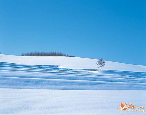 『北海道冬』雪景.jpg