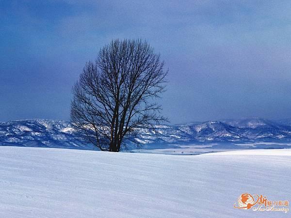 冬雪.jpg