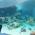 沖繩_180301_0009.jpg