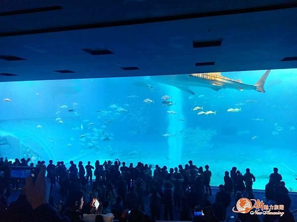 沖繩_180301_0015.jpg