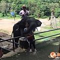 清邁大象園_180803_0005.jpg