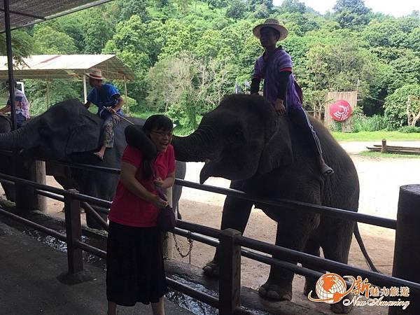 清邁大象園_180803_0006.jpg