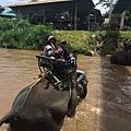 清邁大象園_180803_0002.jpg