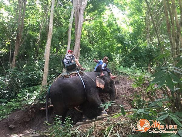 清邁大象園_180803_0003.jpg