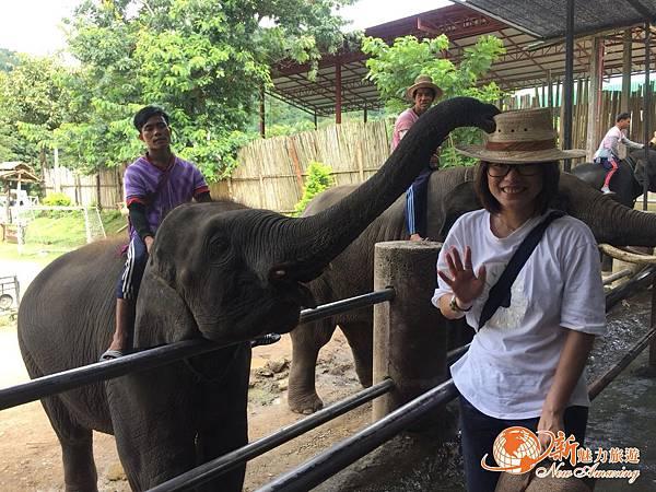 清邁大象園_180803_0007.jpg