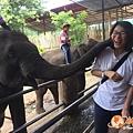 清邁大象園_180803_0008.jpg