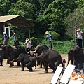 清邁大象園_180803_0009.jpg