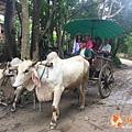 清邁大象園_180803_0011.jpg