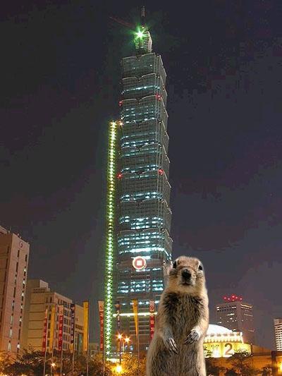 班夫松鼠與101大樓