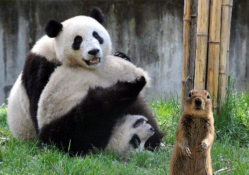 班夫松鼠與動物園