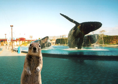 班夫松鼠與海博館