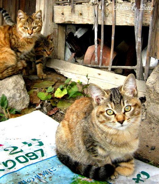 小貓們.JP