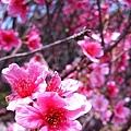 2008鐵砧山春.jpg