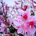 2008鐵砧山春1.jpg