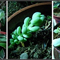 植物大觀園1.jpg
