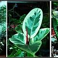 植物大觀園2.jpg
