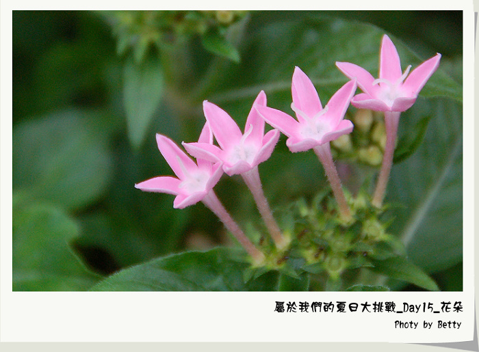 DSC_0006-2.jpg