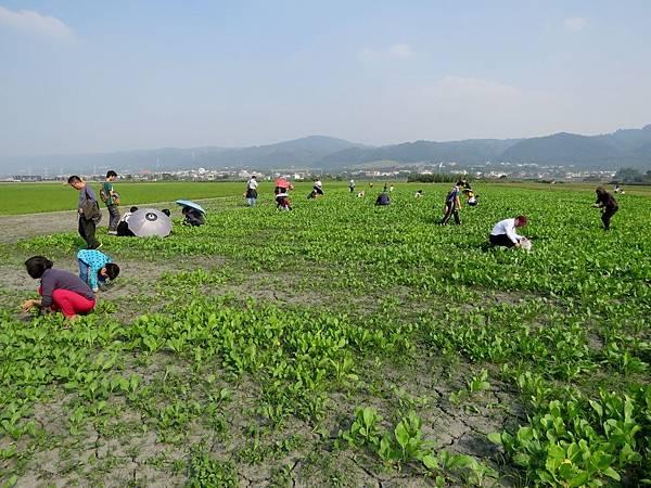 0607彰化縣田中鎮「稻草人藝術節」在望高寮