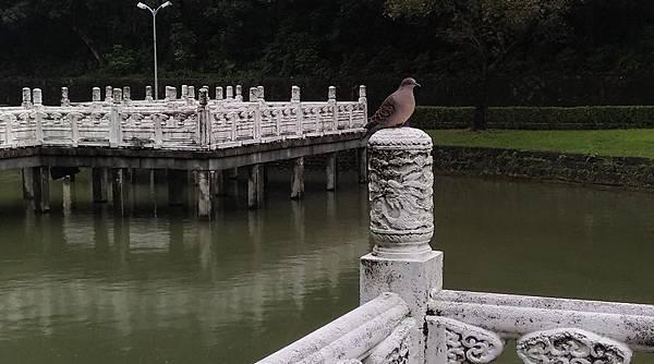0095台北市內湖區碧湖公園