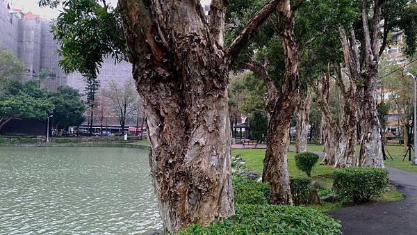 0101台北市內湖區碧湖公園
