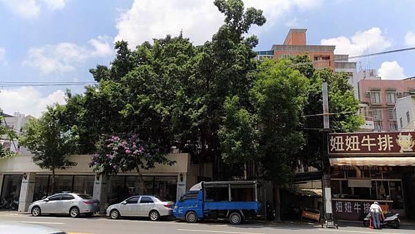 2526台中市北屯區昌平路一段老榕樹