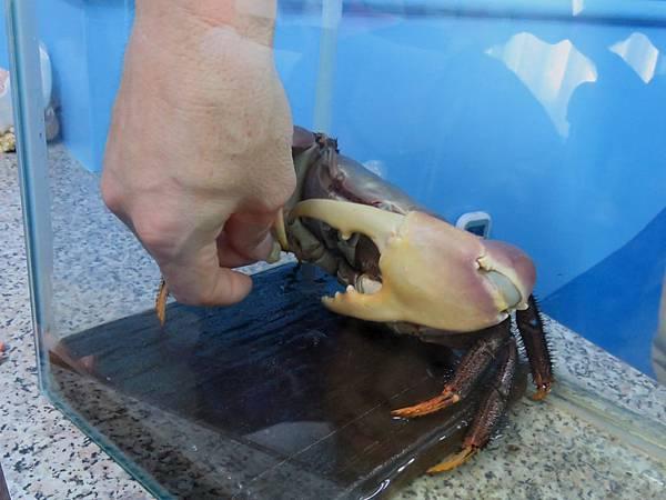 0080澎湖縣西嶼鄉螃蟹博物館