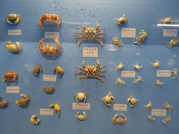 0083澎湖縣西嶼鄉螃蟹博物館