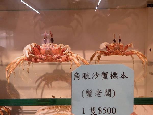 0091澎湖縣西嶼鄉螃蟹博物館
