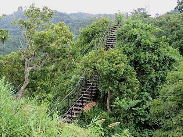0499雲林縣林內鄉龍過脈森林步道